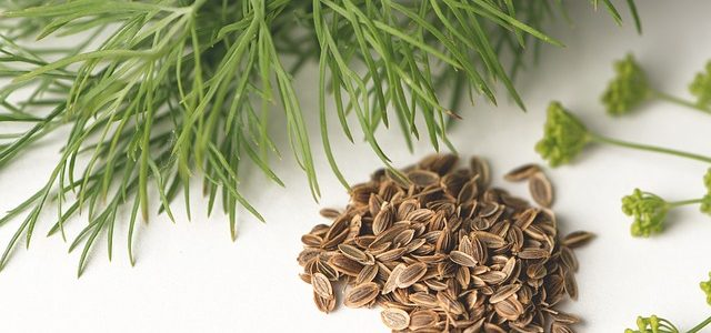 Magazín o přírodních léčivech přináší zajímavosti ze světa bylin